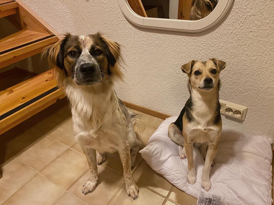 Daisy & Gabriele